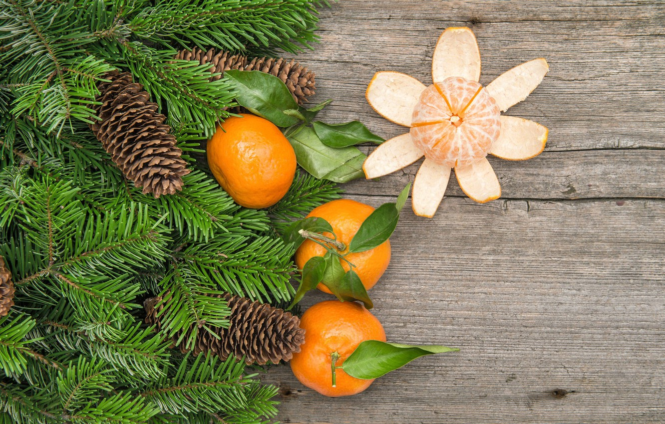 Photo wallpaper branches, Board, spruce, tree, fruit, bumps, tangerines