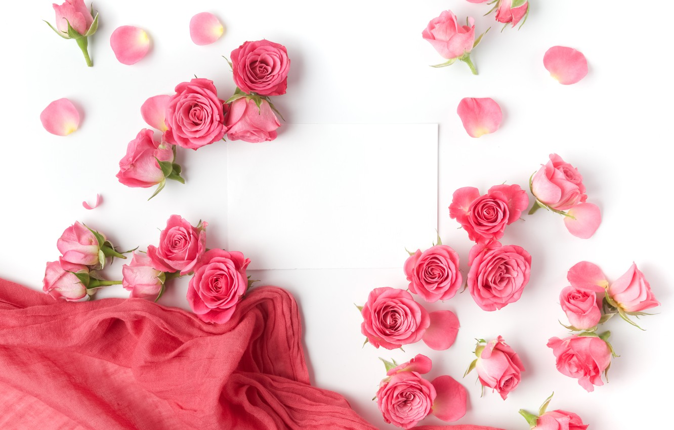 Photo wallpaper roses, buds, pink, flowers, romantic, roses, valentine`s day