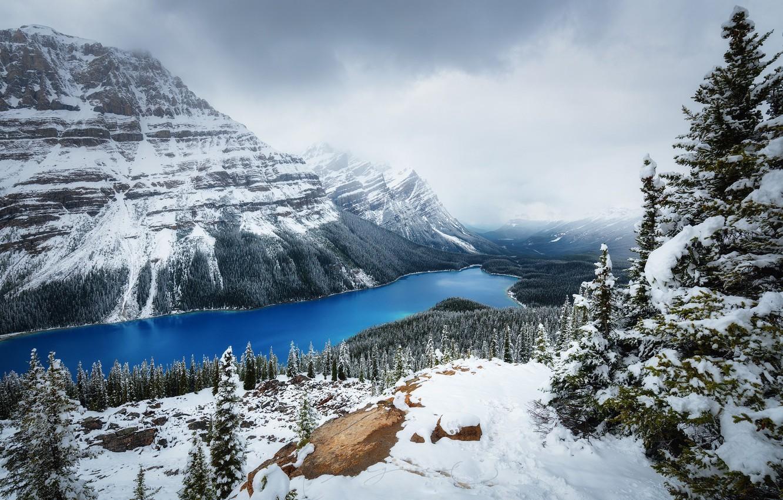 Photo wallpaper winter, forest, snow, Mountains, Canada, lake Peyto