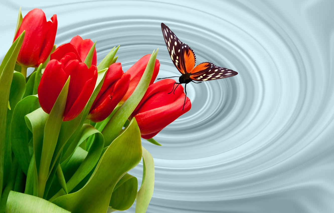 Photo wallpaper butterfly, butterfly, tulips, the Wallpapers, tyulpanyi