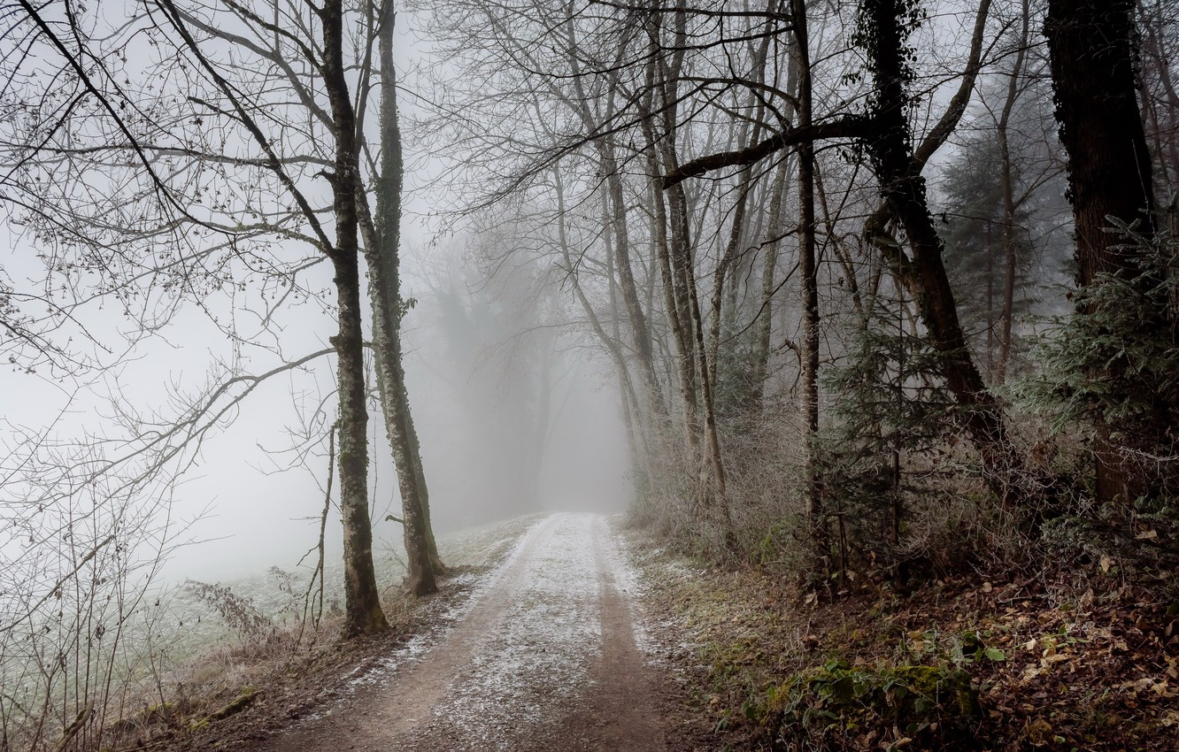 Photo wallpaper road, forest, fog
