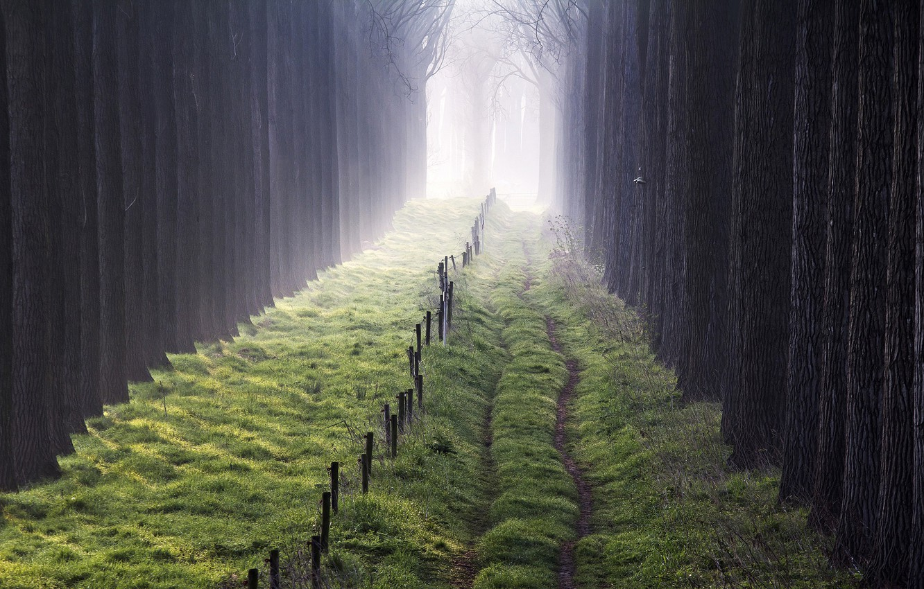 Photo wallpaper trees, fog, the fence