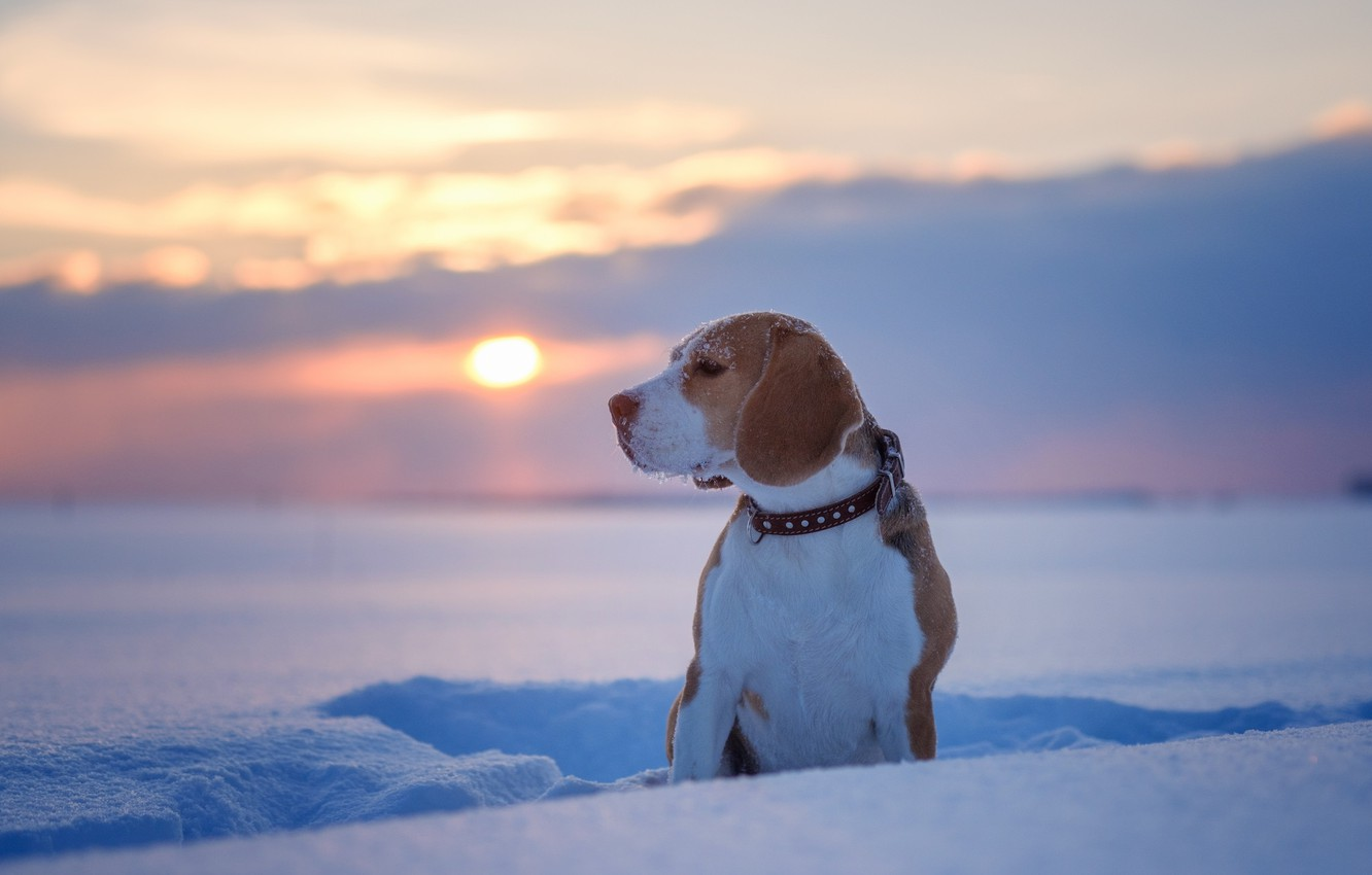 Photo wallpaper winter, snow, nature, Dog, puppy