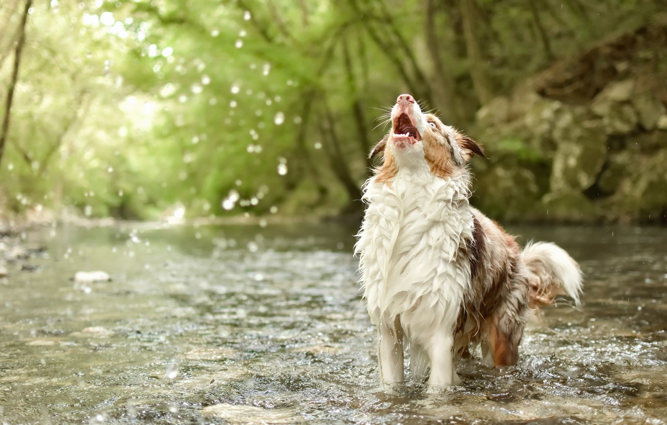 Photo wallpaper nature, river, dog