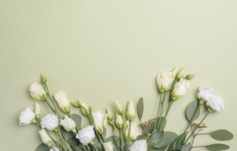 Photo wallpaper Flowers, Bouquet, Background, Eustoma