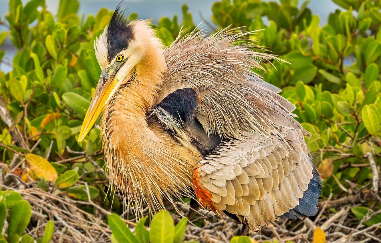 Photo wallpaper bird, feathers, beak, Heron