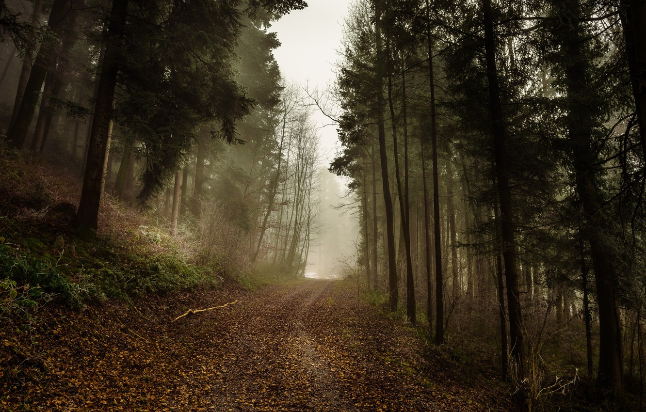 Photo wallpaper road, autumn, forest, fog