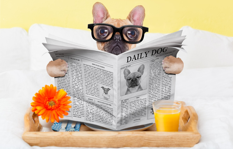Photo wallpaper glass, dog, humor, juice, glasses, newspaper, eyepieces
