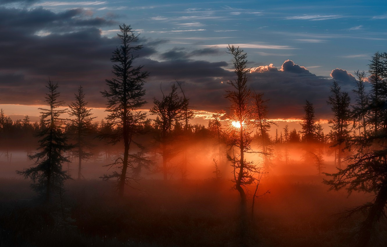 Photo wallpaper forest, the sky, the sun, light, nature, the evening, morning
