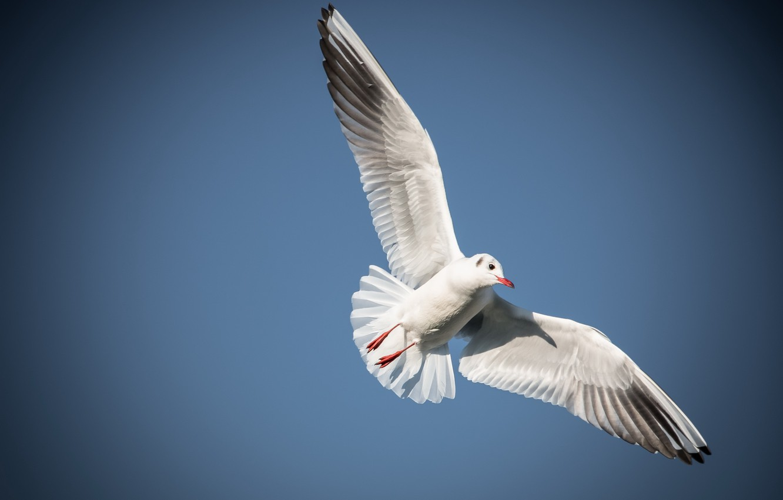 Photo wallpaper the sky, freedom, bird, the world, flight