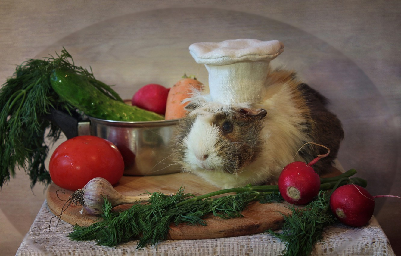 Photo wallpaper animals, spring, kitchen, may, vegetables, composition, Guinea pigs, female pig
