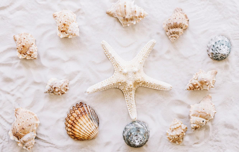 Photo wallpaper sand, beach, star, shell, summer, beach, sand, marine, starfish, seashells