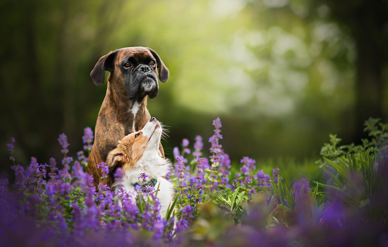 Photo wallpaper flowers, nature, two dogs, Tini and Sunny