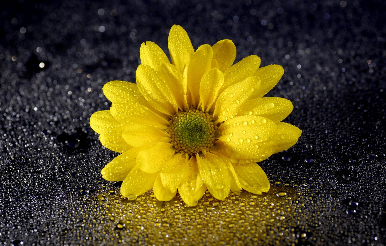 Photo wallpaper flower, drops, reflection, petals