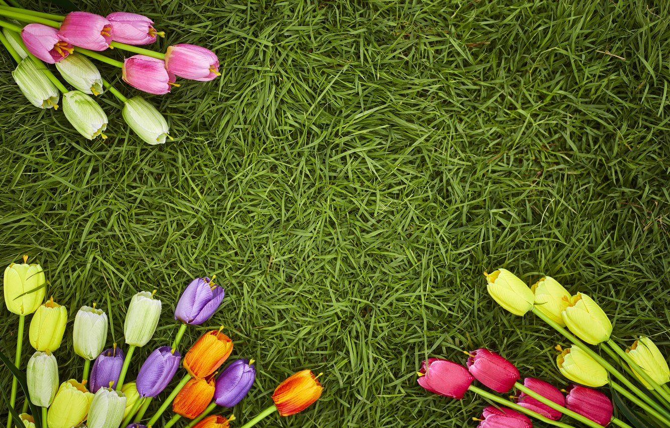 Photo wallpaper grass, flowers, spring, colorful, tulips, flowers, tulips, spring, decoration