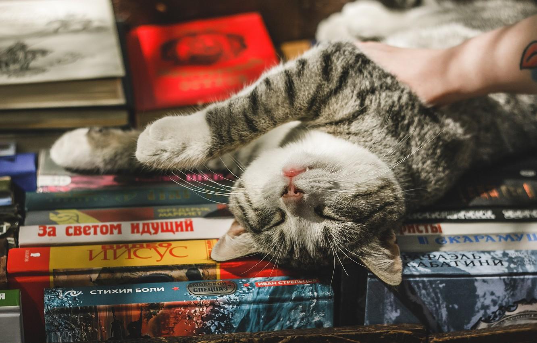 Photo wallpaper cat, cat, relax, books, chill, cat