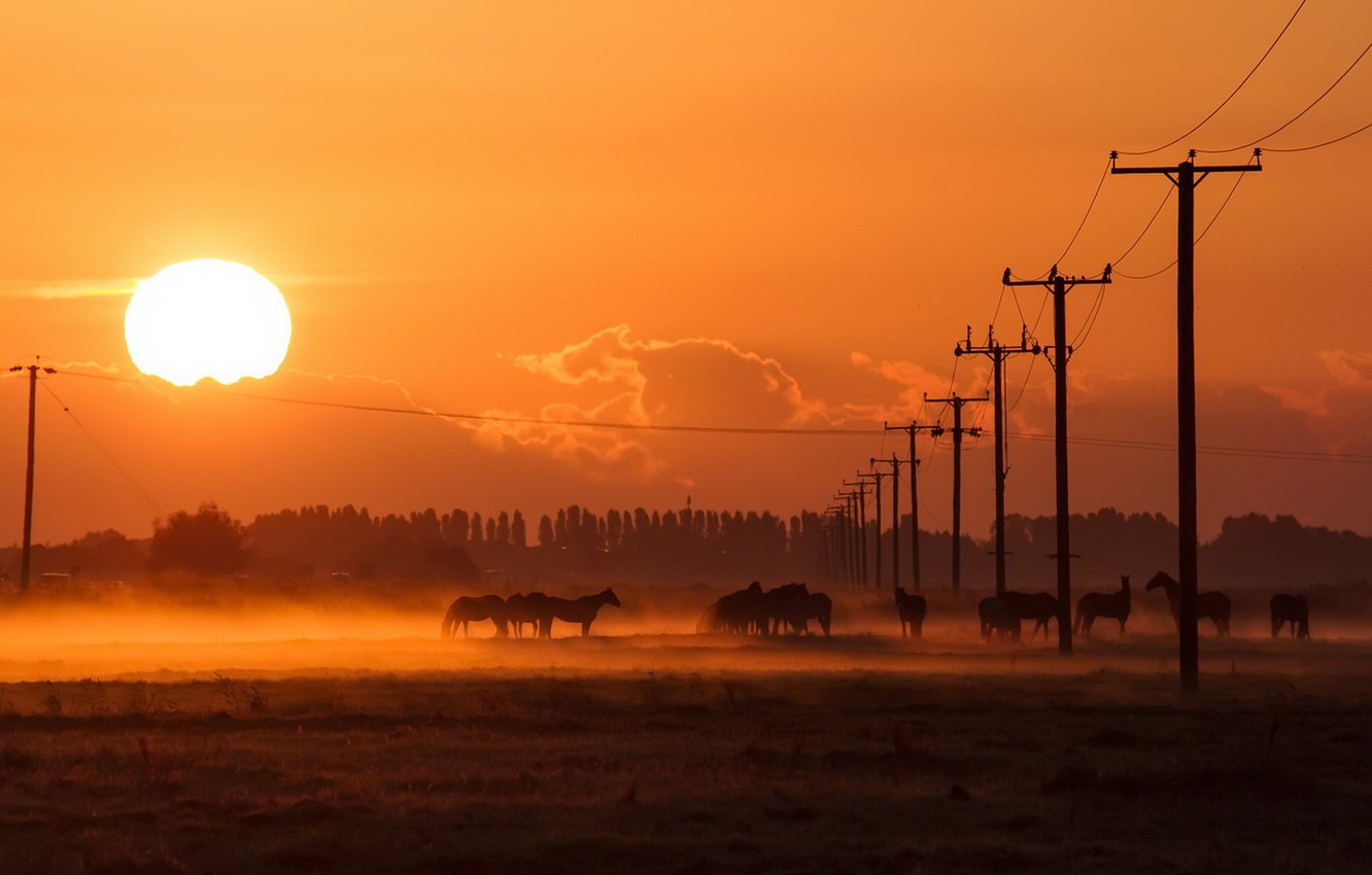 Photo wallpaper the sun, night, fog, posts, wire, horses, horse