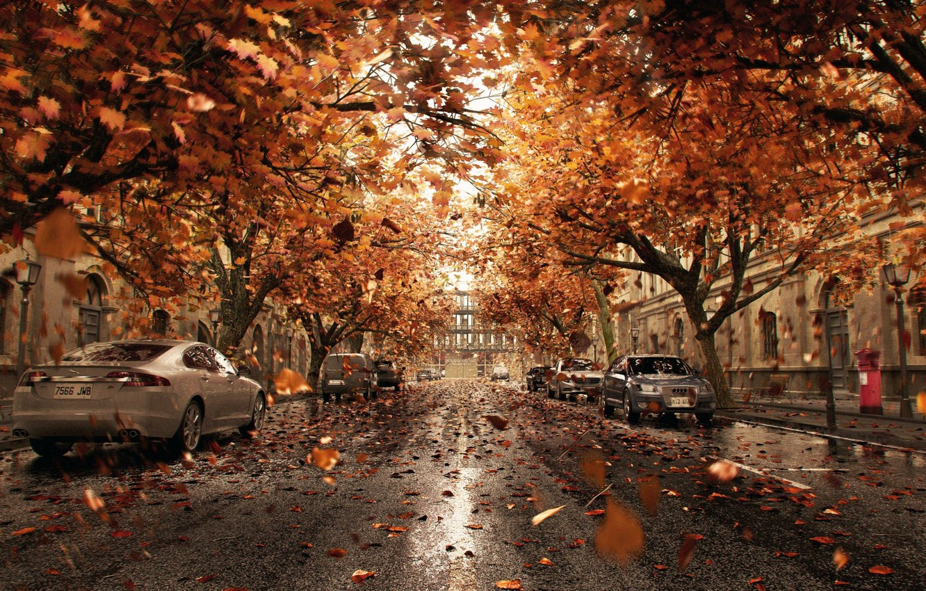 Photo wallpaper leaves, the city, street, cars, Orange Shower