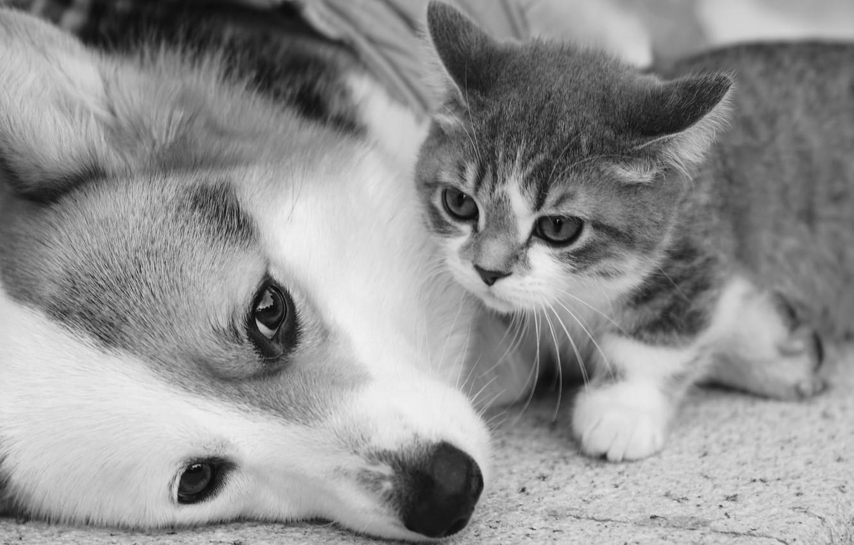 Photo wallpaper kitty, dog, friends