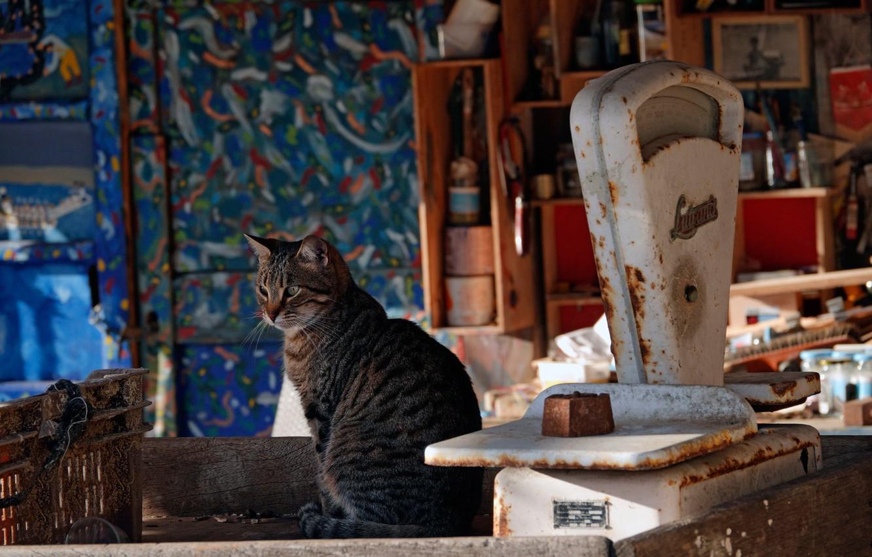 Photo wallpaper cat, cat, Libra
