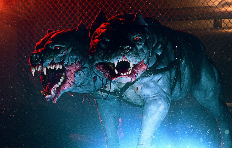 Photo wallpaper face, mouth, fangs, grin, dog, dog, Cerberus, cerberus, hound