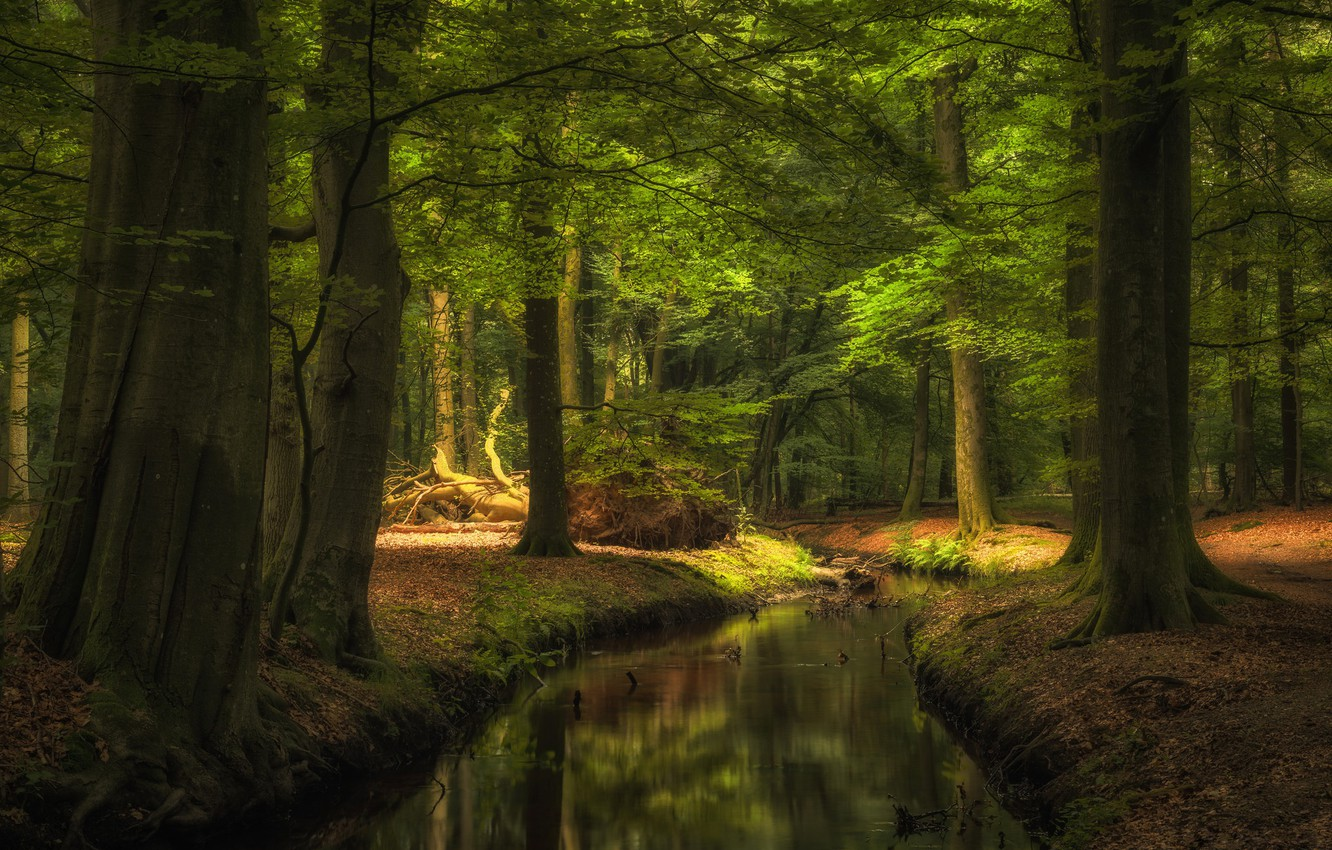 Photo wallpaper river, Water, Nature, Reflection, Grass, Trees, Forest, Leaves, Branches, Roots