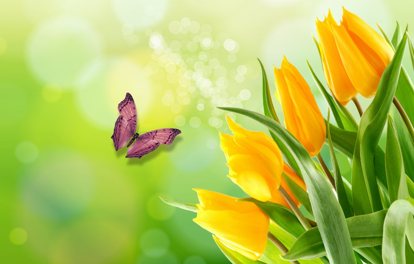 Wallpaper BUTTERFLY, the Wallpapers, SPRING, BEAUTY ...