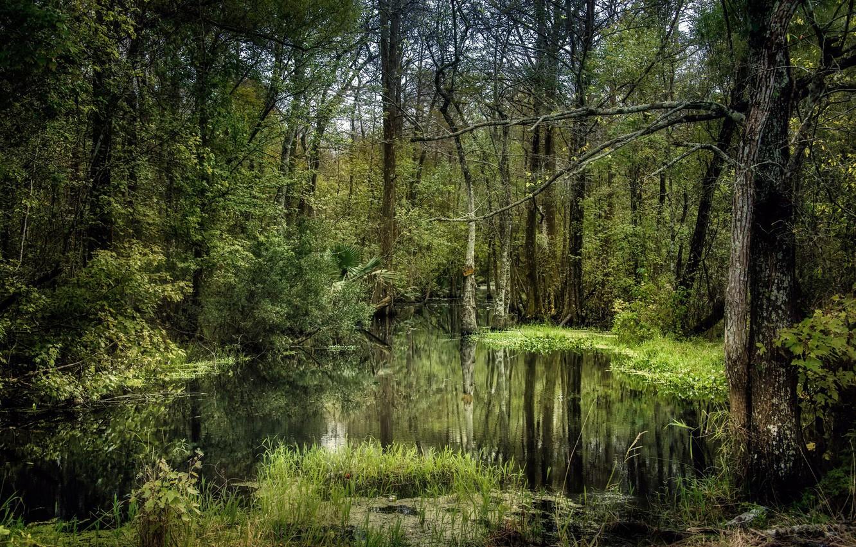 Wallpaper Forest Nature Swamp Images For Desktop Section Priroda Download