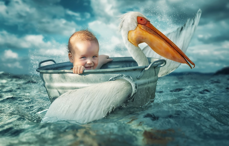 Photo wallpaper sea, bird, child, Taz, Pelican
