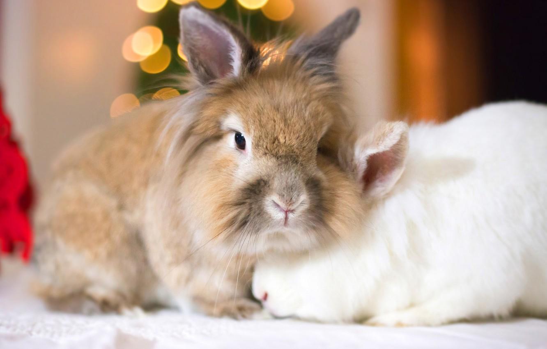 Photo wallpaper look, rabbits, face, a couple
