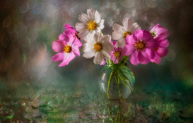 Photo wallpaper wet, water, drops, flowers, glare, background, vase, bokeh, kosmeya