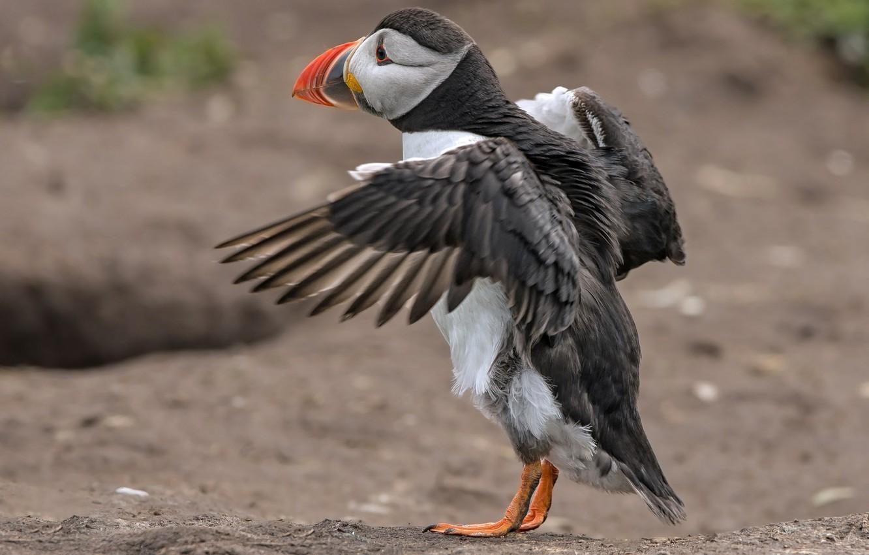 Photo wallpaper bird, wings, beak, stalled