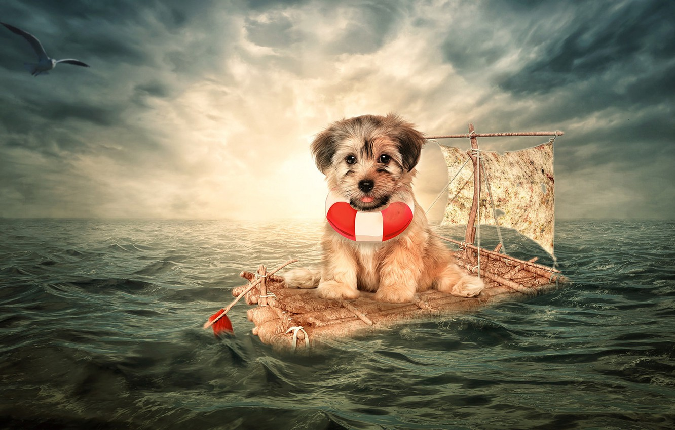 Photo wallpaper sea, the situation, dog, Seagull, puppy, the raft, doggie, lifeline