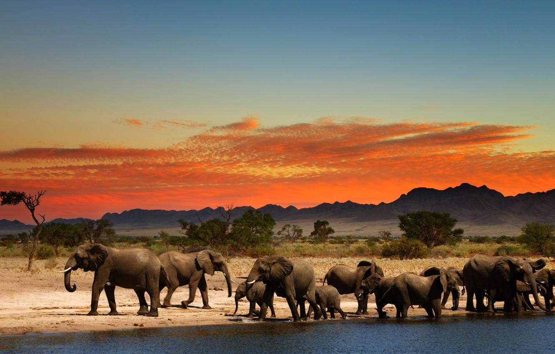 Photo wallpaper glow, Africa, elephants, drink, the herd