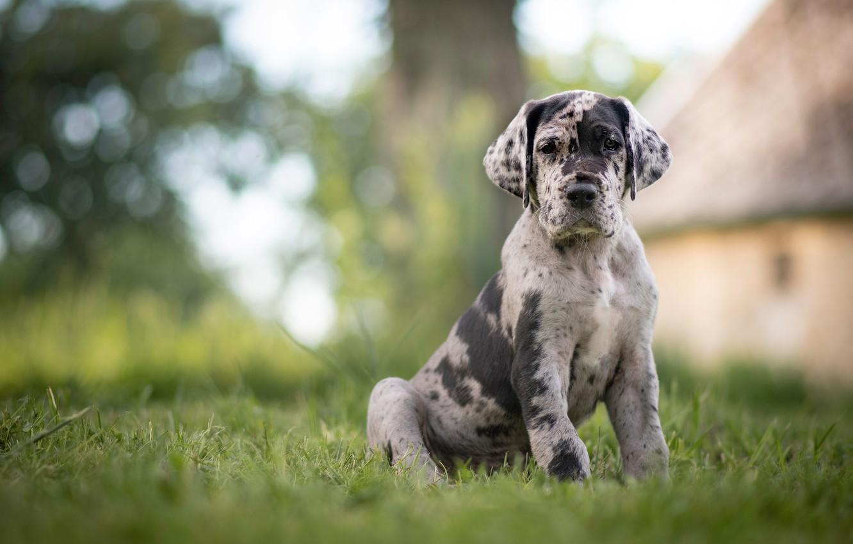 Photo wallpaper grass, dog, puppy, bokeh