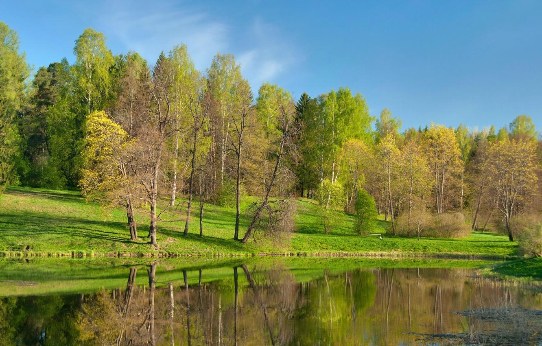 Photo wallpaper trees, lake, pond, Park
