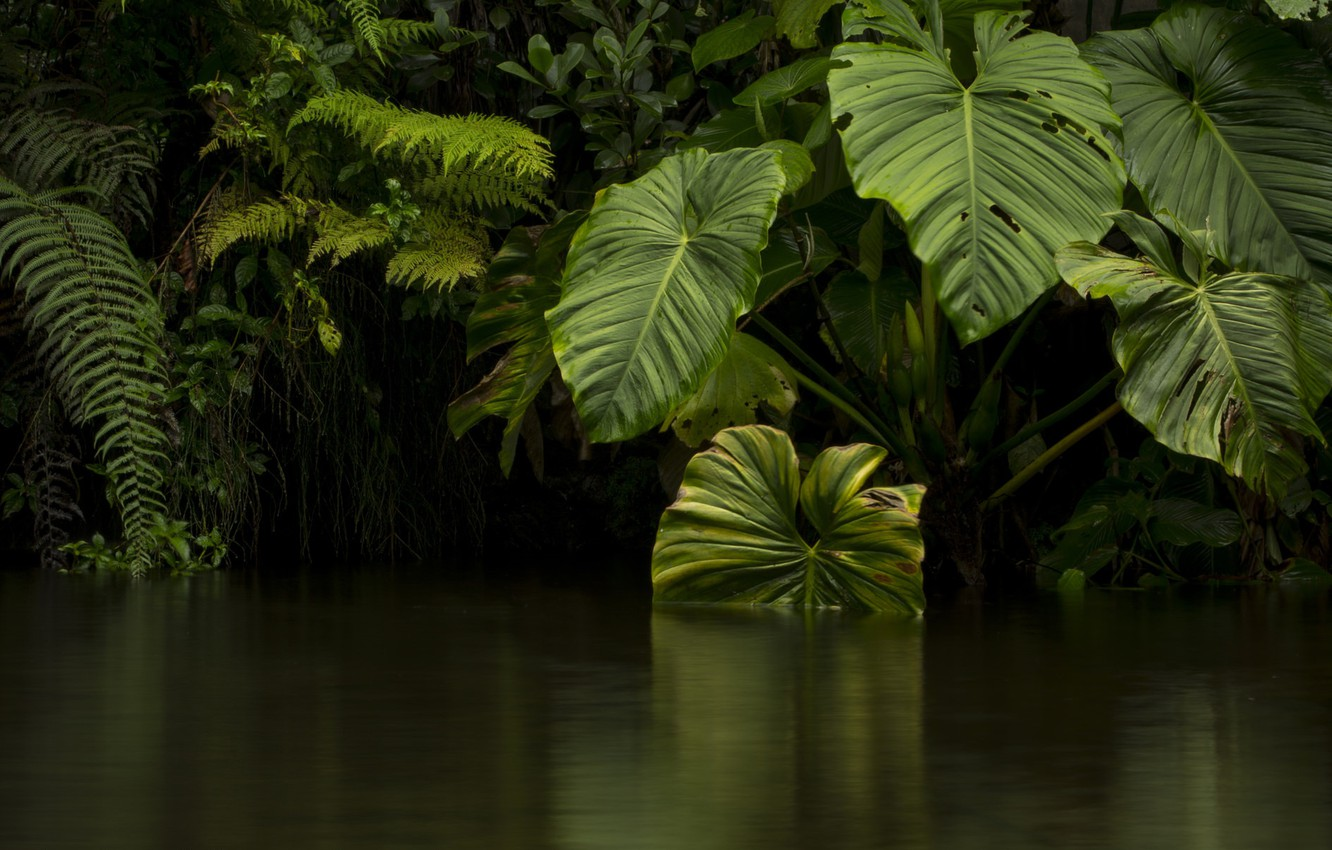 Photo wallpaper leaves, water, green, jungle