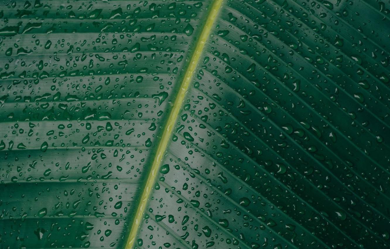 Photo wallpaper greens, leaves, water, drops