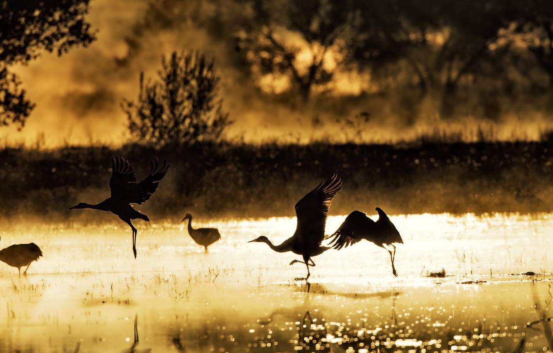 Photo wallpaper birds, fog, lake, morning