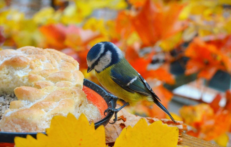 Photo wallpaper Autumn, Bird, Autumn, Bird