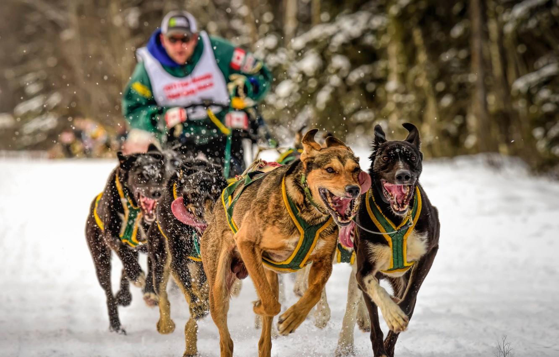 Photo wallpaper dogs, sport, running