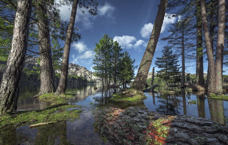 Photo wallpaper trees, mountains, lake
