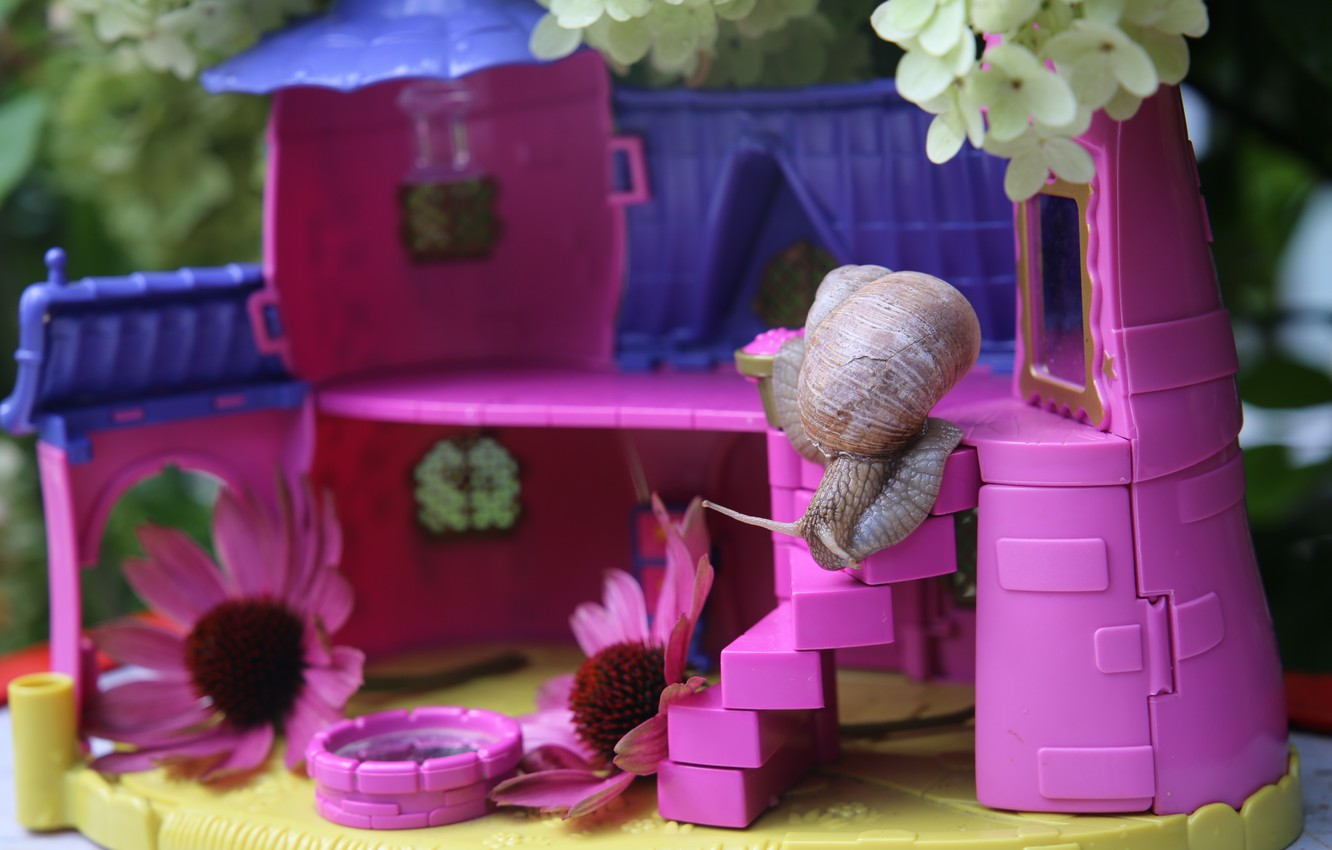 Photo wallpaper purple, flowers, background, pink, snail, house, a doll's house, curiosity, toy, for Barbie, Achatina, plastic