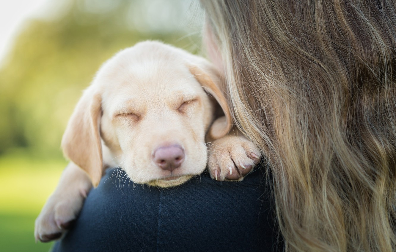 Photo wallpaper baby, puppy, face, doggie