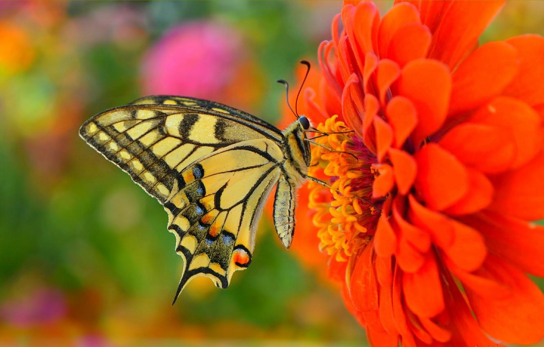 Photo wallpaper Macro, Butterfly, Flower, Flower, Macro, Butterfly