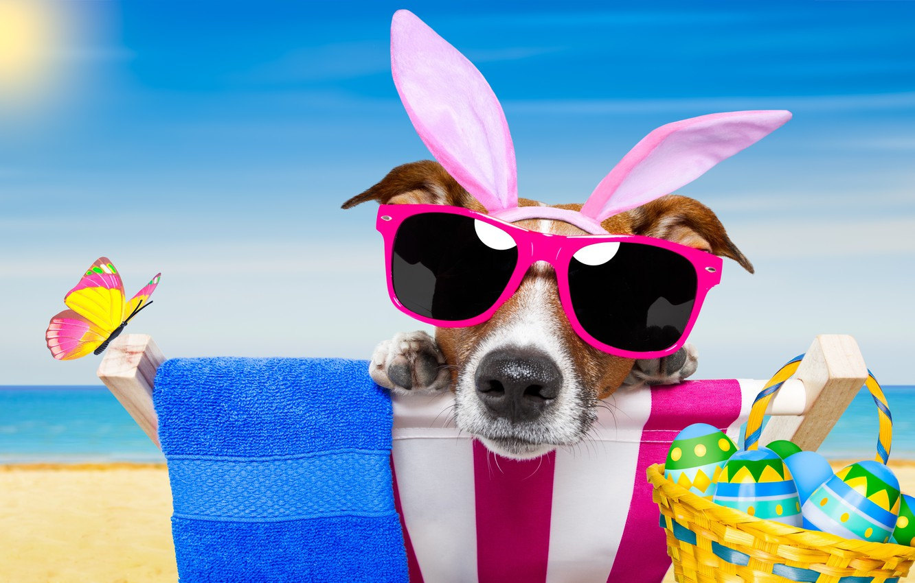 Wallpaper Beach Butterfly Dog Glasses Happy Beach Dog Easter Eggs Funny Vacation Sunglasses Bunny Ears Images For Desktop Section Sobaki Download