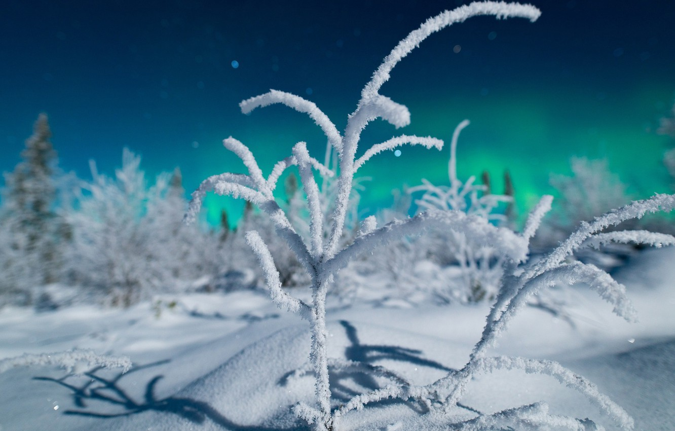 Photo wallpaper winter, forest, light, snow, night, branches, nature, Northern lights, North, bokeh