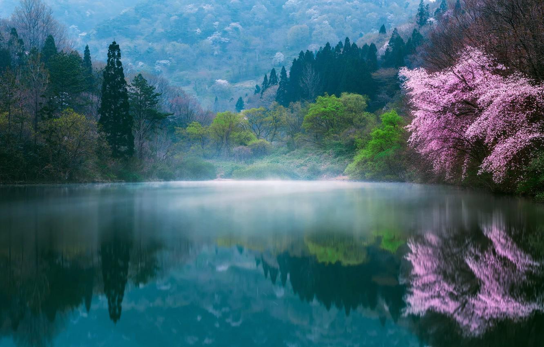Photo wallpaper flowers, nature, fog, lake, spring, Japan, Sakura, haze, dervla