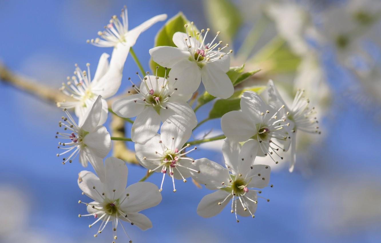 Photo wallpaper flowers, spring, petals, garden