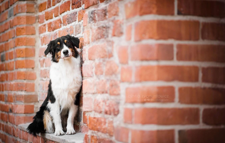Photo wallpaper house, each, dog
